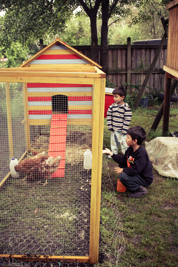 Chickens & Boys