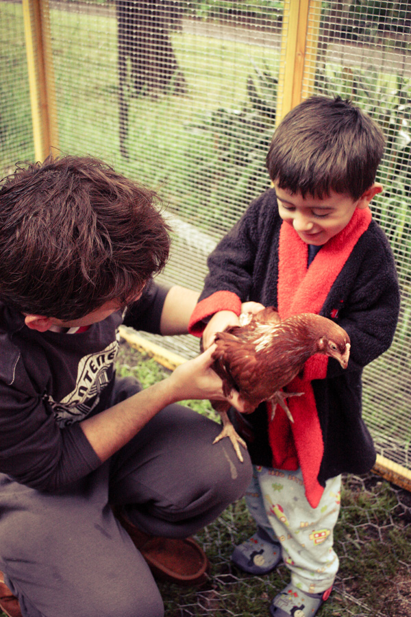 Petting Chooks