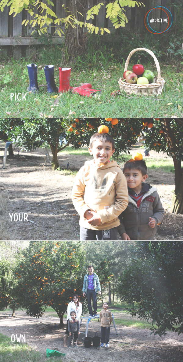 We love PYO - Pick Your Own! It is so addictive!