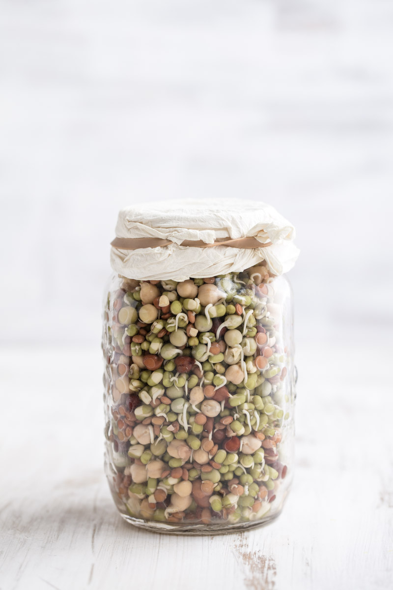 Sprouting In Jars - Cook Republic