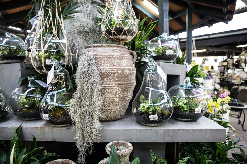 Terrariums - Cook Republic