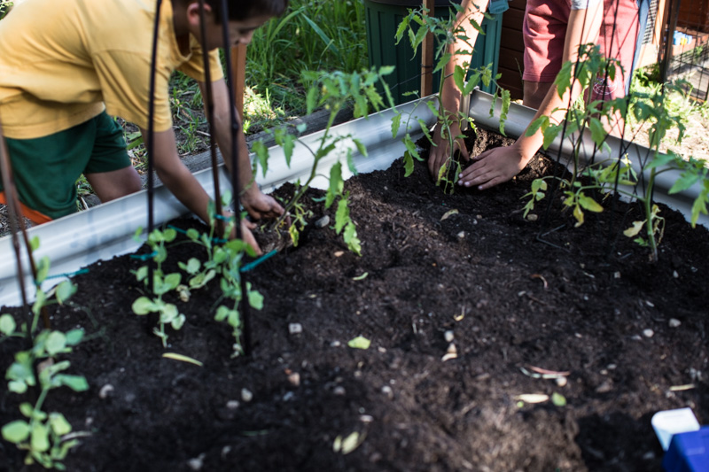 Planting A Spring Veggie Patch With The Kids - Sneh Roy, photo