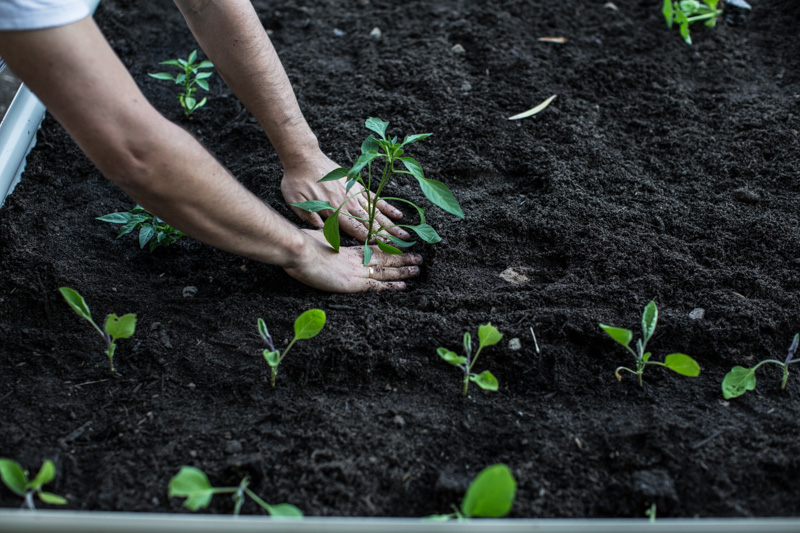 Planting A Veggie Patch - Cook Republic