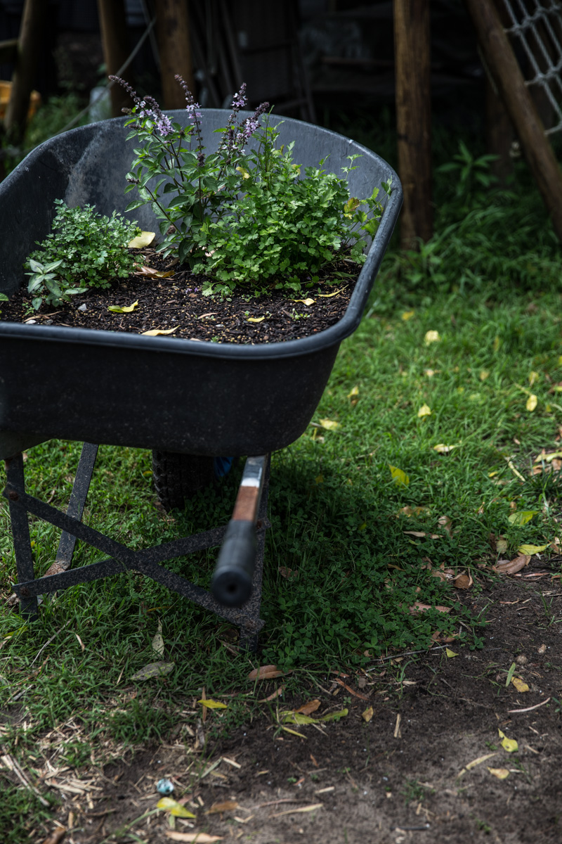 Herbs In Wheelbarrow - Sneh Roy, photo