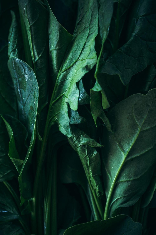Spinach (Paalak) Daal - Cook Republic