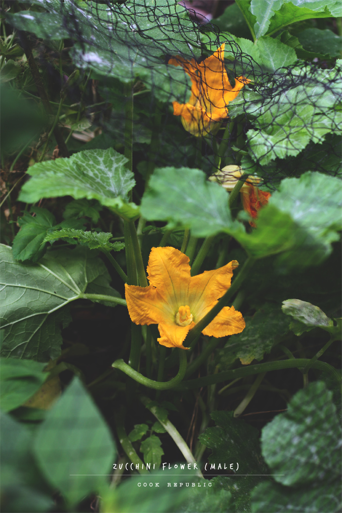 Zucchini Flower - Cook Republic