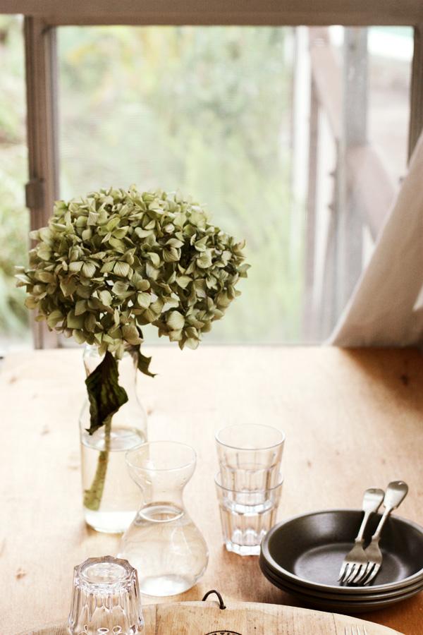Hydrangea By Window Light